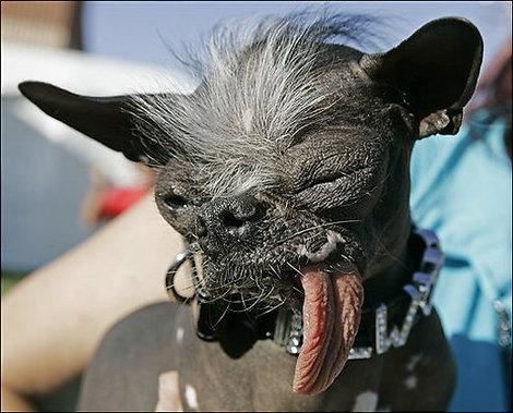Ugly_dog_07